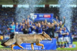 Blue fox leicester city football club premier league champions 2016